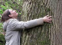 Wellness aus dem Westerwald – Gesund und schön durch Blätter, Blüten und Bäume