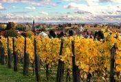 Südliche Weinstraße – Gesundheit und Genuss in und um Bad Bergzabern